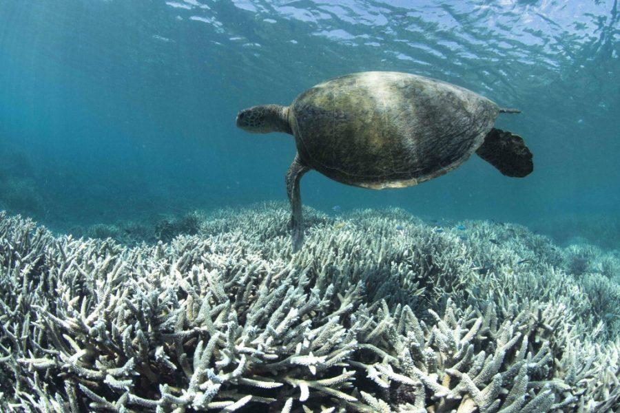 Don't Mourn the Great Barrier Reef-- Save It