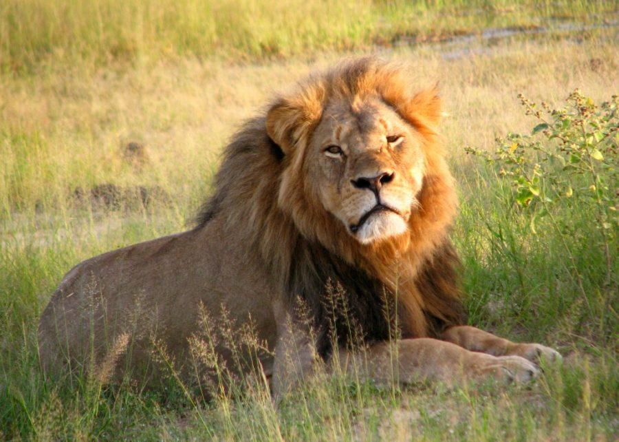 Charges+on+Walter+Palmer+Dropped