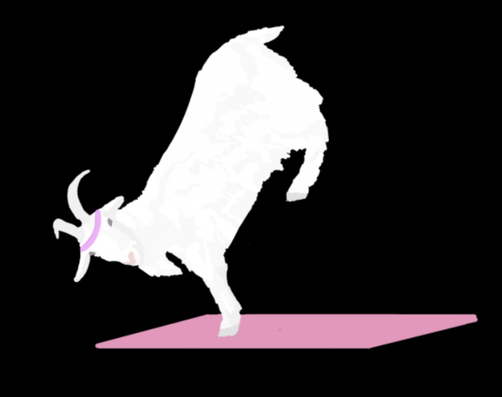 While the goats are not prompted to participate in the yoga, who can keep them from striking a few poses?
