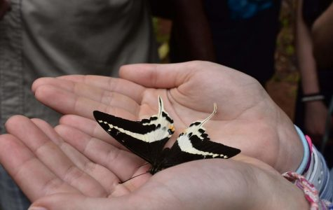 EHS students contribute to the discovery of new Swallowtail Butterfly in Fiji