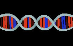 Genetically modifying humans: is it ethical?